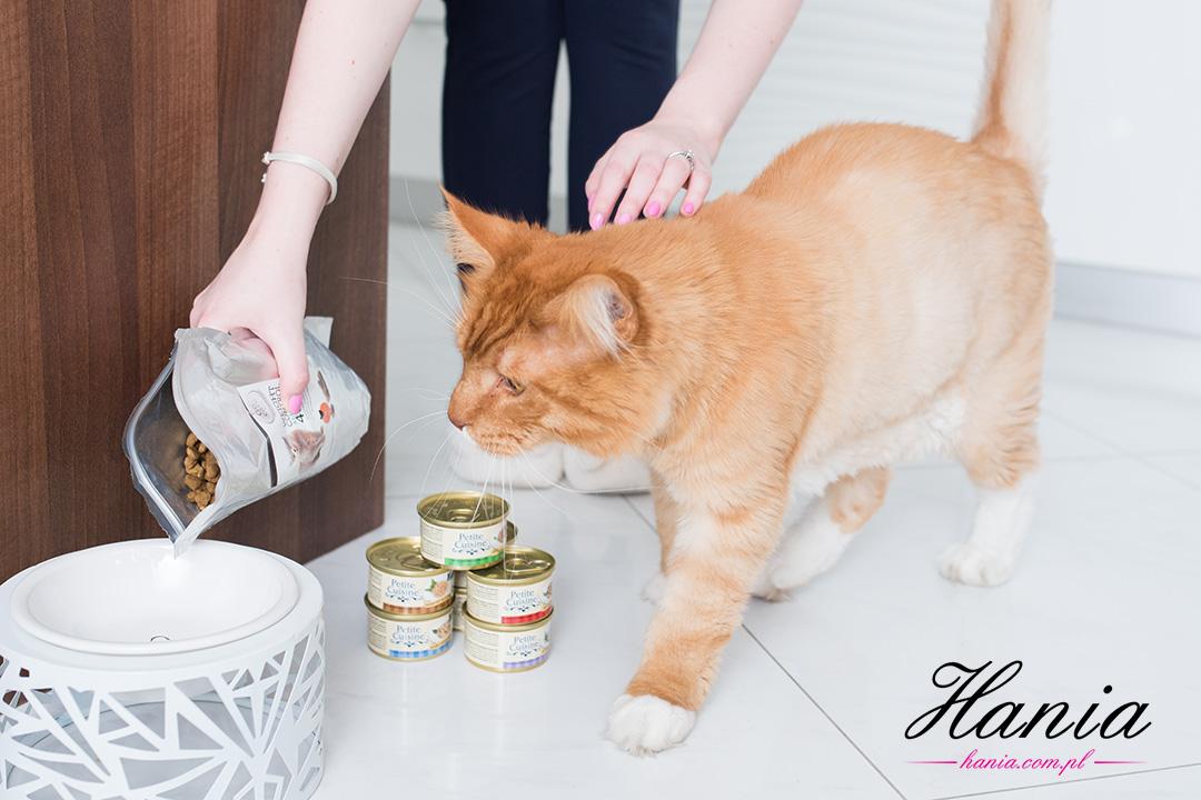 zdrowy kot